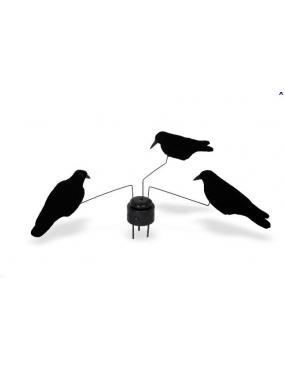 Manége + 3 corbeaux